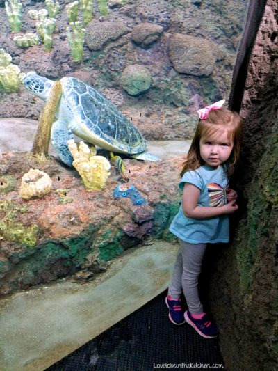 Turtle at Sea World
